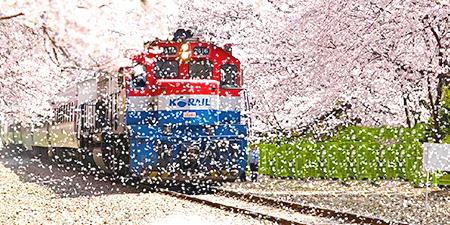 Du lịch Hàn Quốc ngắm hoa anh đào giá tốt 2017 từ Tp.HCM