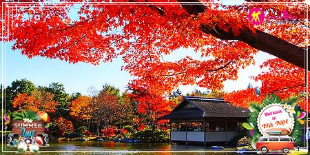 Du Lịch Nhật Bản Osaka - Kyoto - Nara tháng 9 mùa lá đỏ từ Hà Nội 2017