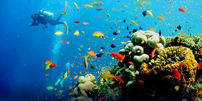 Du Lịch Phú Quốc Bơi Ngắm San Hô, Câu Cá Nam Đảo Phú Quốc
