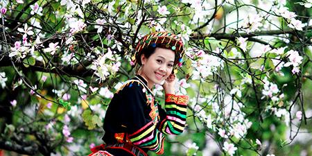Du Lịch Tây Bắc - Mai Châu - Mộc Châu mùa hoa mơ, mận nở trắng đồi