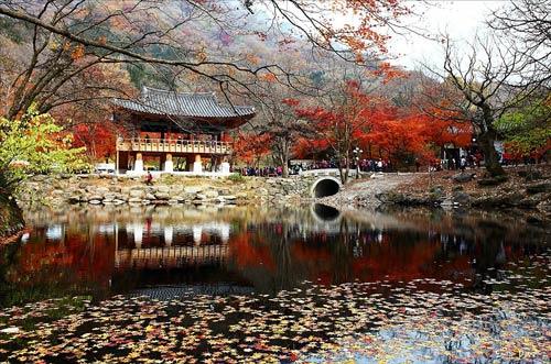 Lãng mạn mùa thu Hàn Quốc
