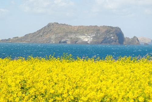 Kinh nghiệm du lịch Hàn Quốc: Đảo Jeju thiên đường tình yêu