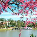 Ý kiến cảm nhận khách hàng đi Du lịch Đà Lạt ngày 01/02/2014