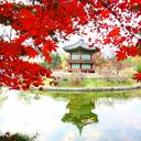 Thu Hàn Quốc trong trái tim tôi