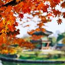 Phản hồi của khách hàng sau khi đi Du lịch Hàn Quốc ngày 09/07/2014