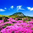 Mùa xuân Jeju – Ấn tượng và say mê