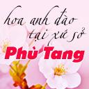 Sắc hoa anh đào rực rỡ xứ Phù Tang