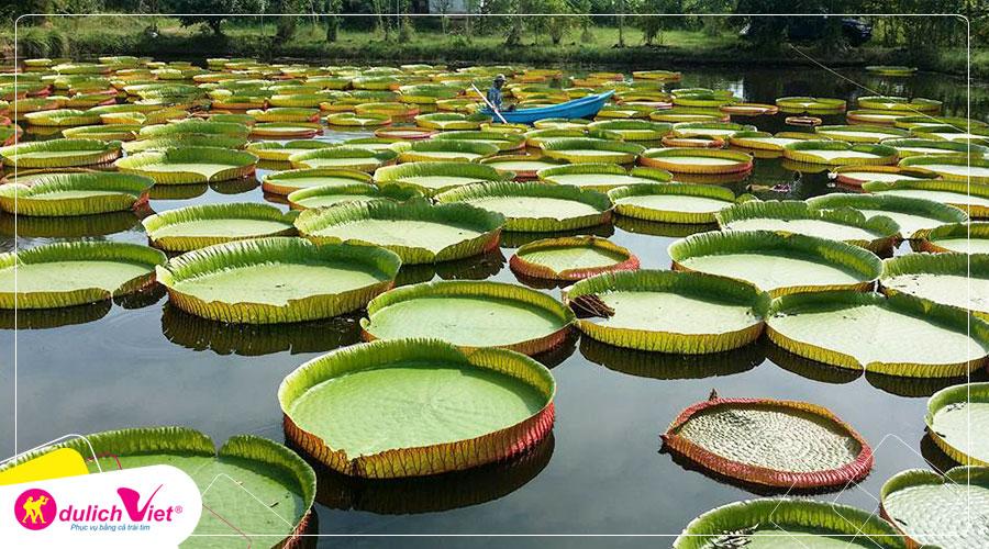 Du lịch miền Tây - Đồng Tháp - Làng Hoa Sa Đéc - Vườn Quýt Hồng Lai Vung - Chùa Lá Sen từ Sài Gòn