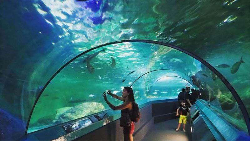 Du lịch Úc mùa Xuân - Thám hiểm Bảo tàng hải dương học Sydney Aquarium