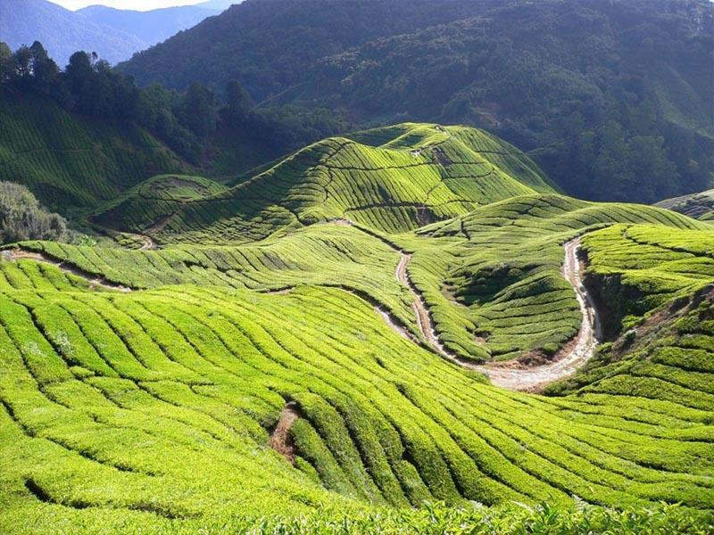 Top 10 điểm đến du lịch Malaysia vô cùng xinh đẹp!