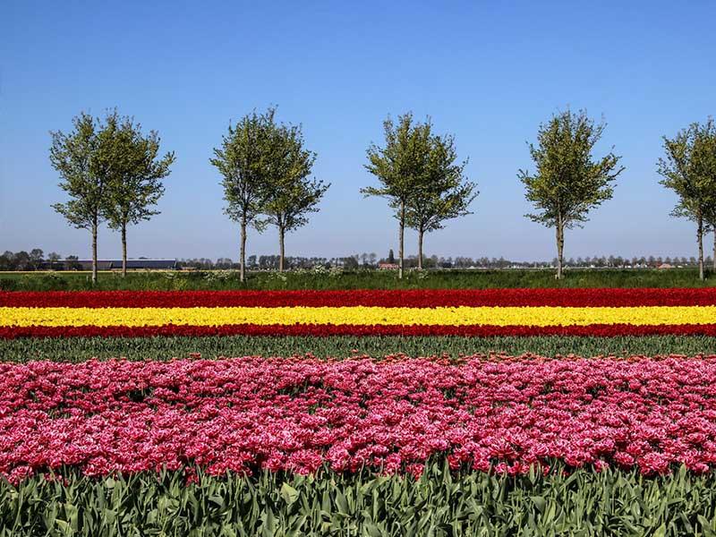 Du lịch Hà Lan nên tham quan những vườn hoa nào