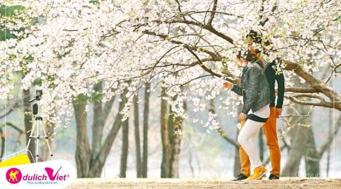 Du lịch Hàn Quốc mùa hoa Anh Đào Seoul - JeJu - Nami - Everland từ Sài Gòn