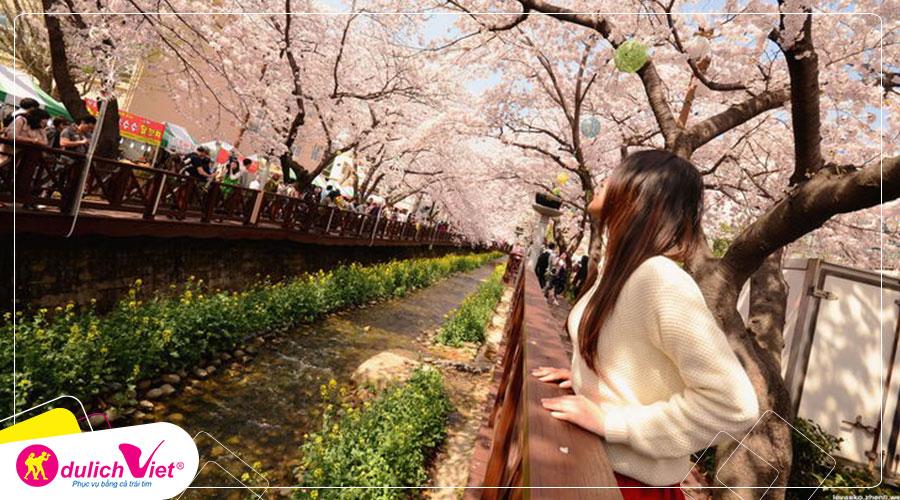 Du lịch Hàn Quốc mùa hoa Anh Đào 2020 từ Sài Gòn 4N4Đ