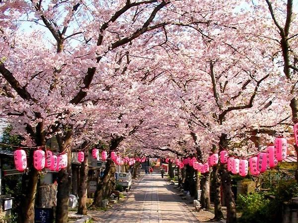 Du lịch Nhật Bản: Vi vu xứ sở hoa Anh Đào dịp tết hằng năm