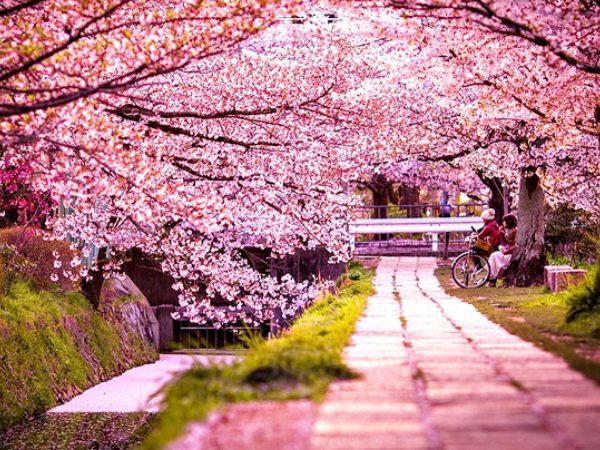 Du lịch Nhật Bản tháng mấy để tham gia lễ hội hoa anh đào?