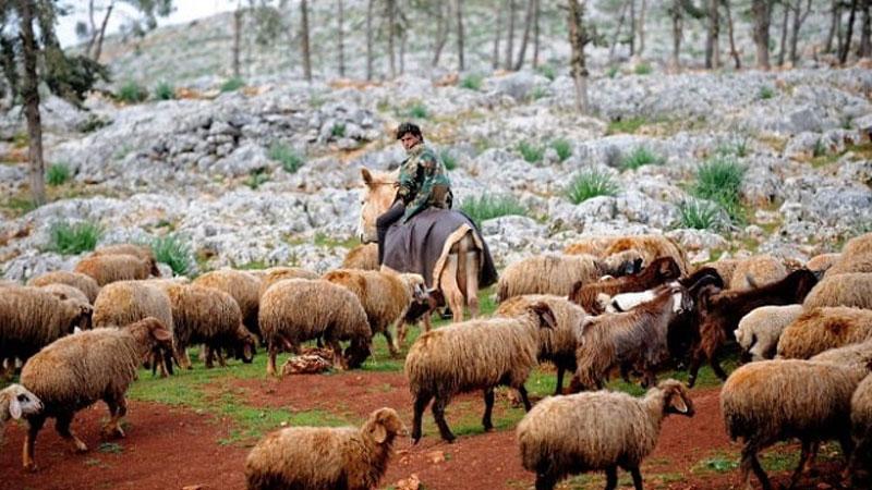 Du lịch Nga đừng quên tham gia lễ hội chăn cừu bạn nhé!