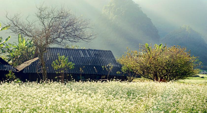 Làng thuông cuông tại Mộc Châu
