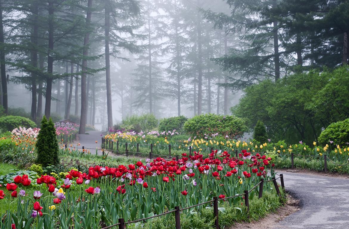 Du Lịch Hàn Quốc -Vườn Morning Calm mang vẻ đẹp kiêu kỳ