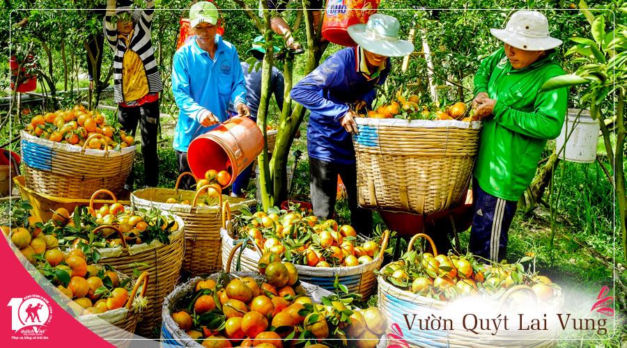 Du Lịch Đồng Tháp - Làng Hoa Sa Đéc - Vườn Quýt Hồng Lai Vung giá tốt