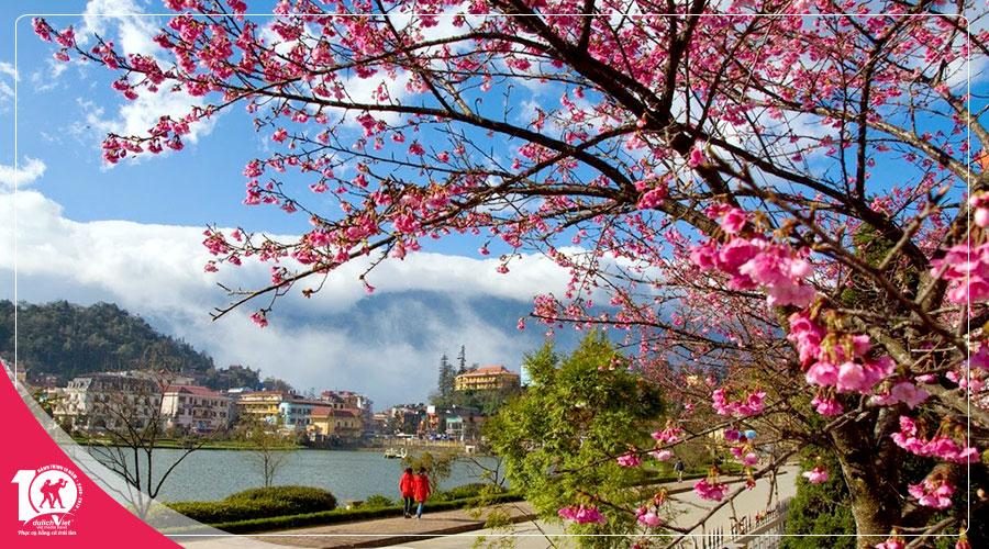 Du Lịch Nha Trang - Đà Lạt, Tour Khám Phá Mùa Hoa Mai Anh Đào 5 ngày