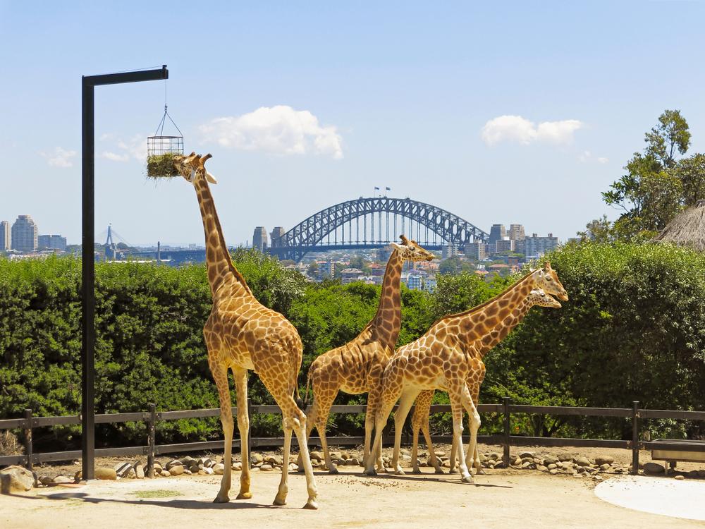 Du lịch Úc tham quan vườn bách thú Taronga