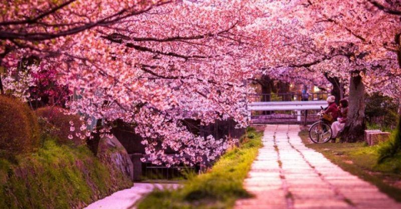 Tuyệt vời khi khám phá những điểm du lịch Nhật Bản