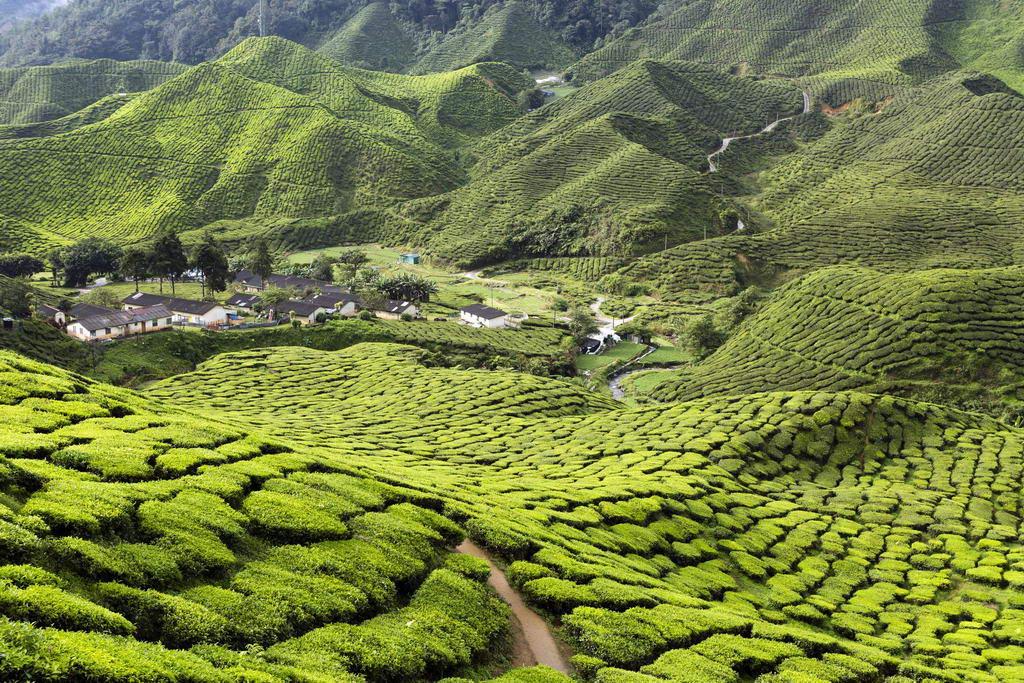 Du lịch Malaysia - Cao nguyên Cameron chốn bình yên giữa lòng Malaysia