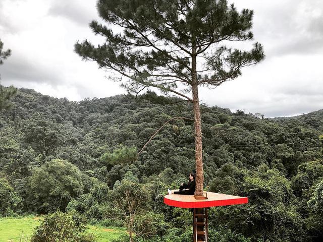 cây thông cô đơn