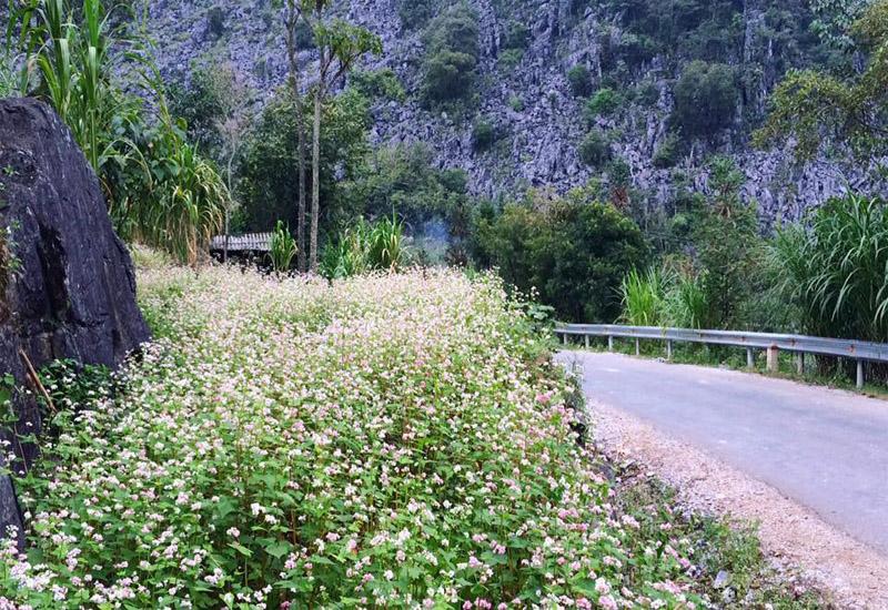 cung đường hoa tam giác mạch thung lũng Sủng Là