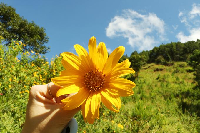 Vẻ đẹp loài hoa dã quỳ Đà Lạt