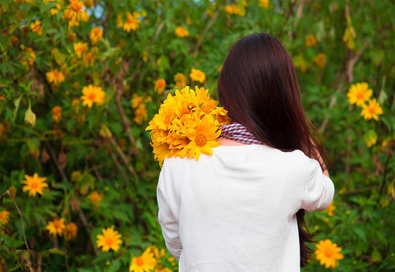 Cung đường hoa Dã Quỳ bên làng hoa Vạn Thành