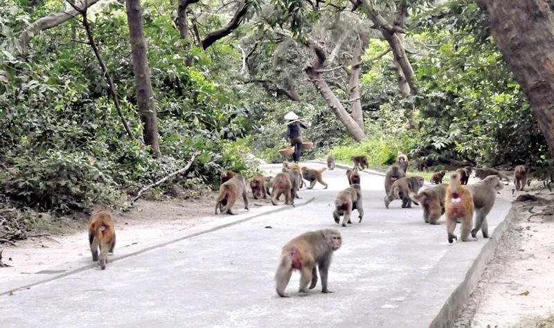 Du lịch Hạ Longdu khách đi thuyền tham quan đảo Khỉ