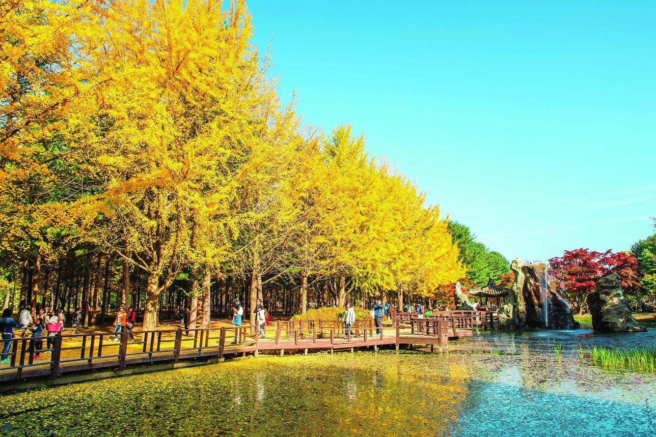 Du Lịch Hàn Quốc -Đảo Nami mùa lá đỏ