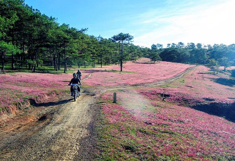 Đi khám phá đồi cỏ hồng Đà Lạt