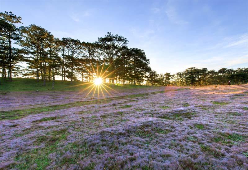 đồi cỏ hồng đà lạt