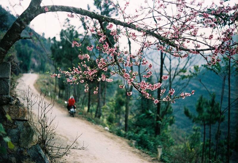 Lên du lịch Đông Bắc tết dương lịch để ngắm mùa hoa đào Sapa nở rực trời