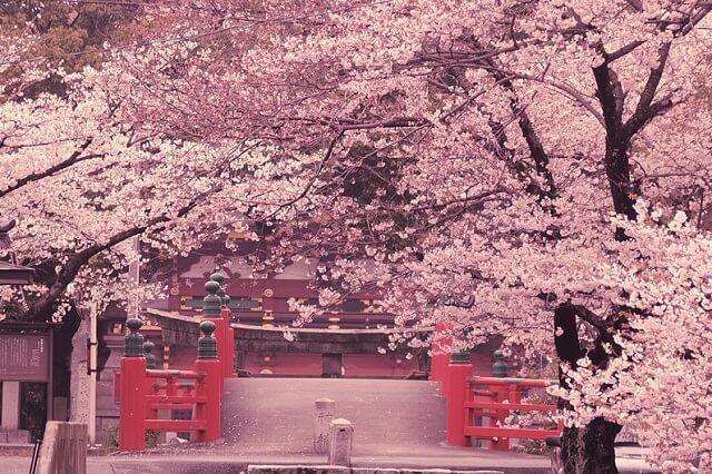 Hạn chế du lịch Nhật Bản vào mùa Sakura