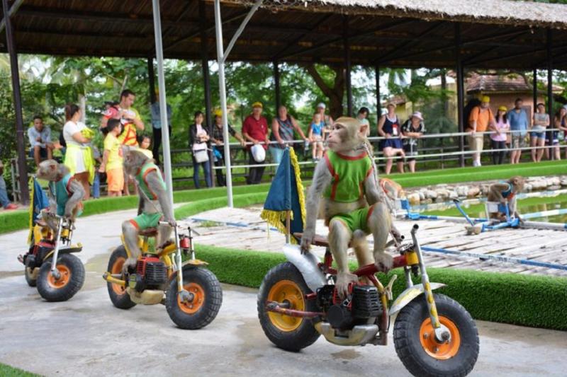 Mách bạn kinh nghiệm du lịch Đảo Khỉ - Nha Trang