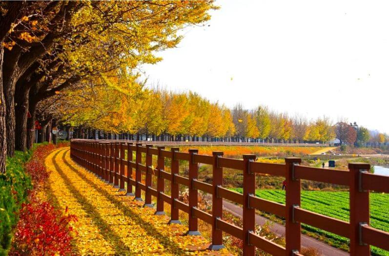 Hàn Quốc - Điểm du lịch Châu Á nổi tiềng