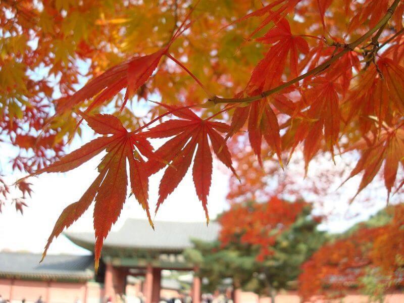 Du lịch Hàn Quốc vào mùa Thu có gì hấp dẫn
