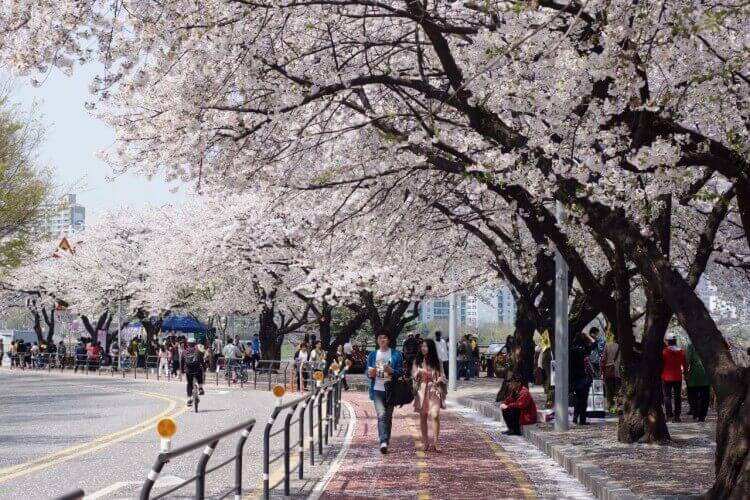 Du lịch Hàn Quốc mùa Thu - Jinhae