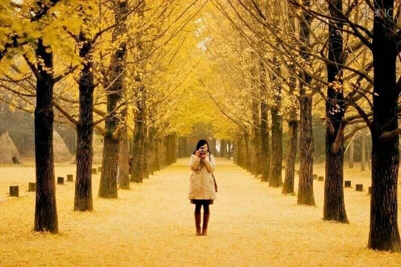 10 điểm check in siêu đẹp ở Hàn Quốc khi mùa Thu về