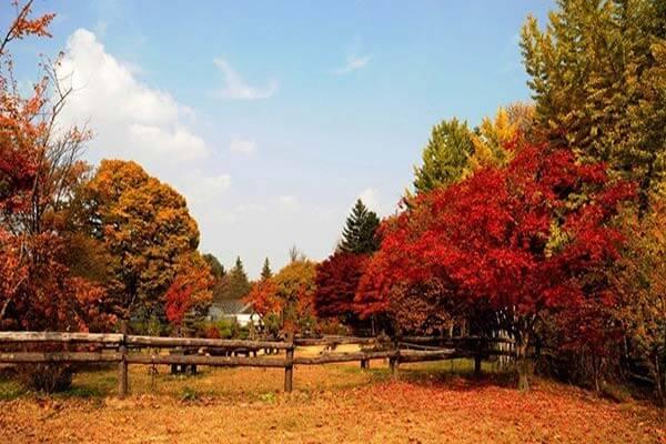 Du lịch Hàn Quốc mùa Thu - những cây phong đỏ