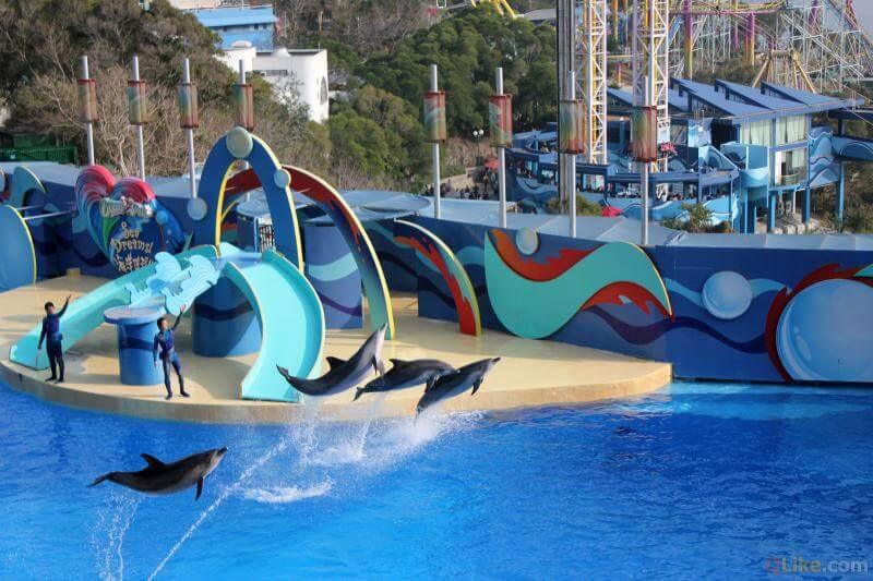 Du lịch Hồng Kông, tham gia Dolphin Show Ocean Park