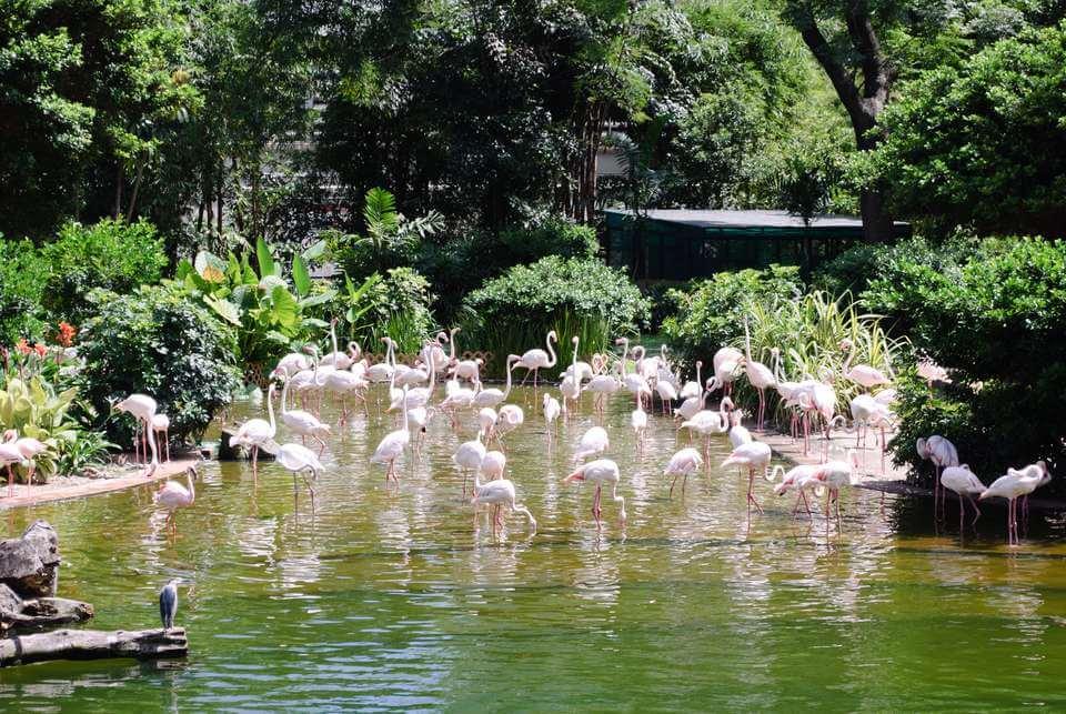 Những điểm du lịch Hồng Kông miễn phí dành cho bạn