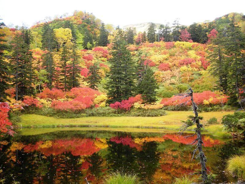 Thả hồn chiêm ngưỡng vẻ đẹp thiên nhiên ban tặng ở sông Hozu