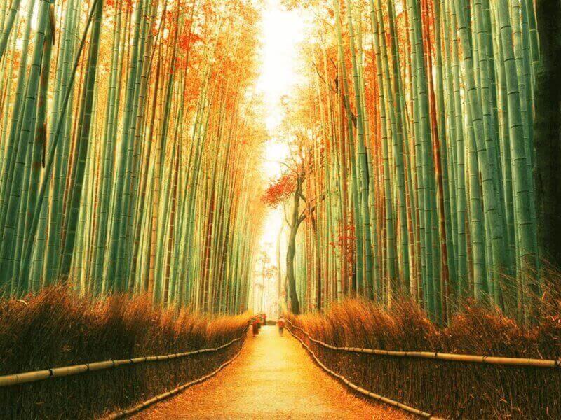 Vườn Arashiyama chính là địa điểm yêu thích của khách du lịch Nhật Bản