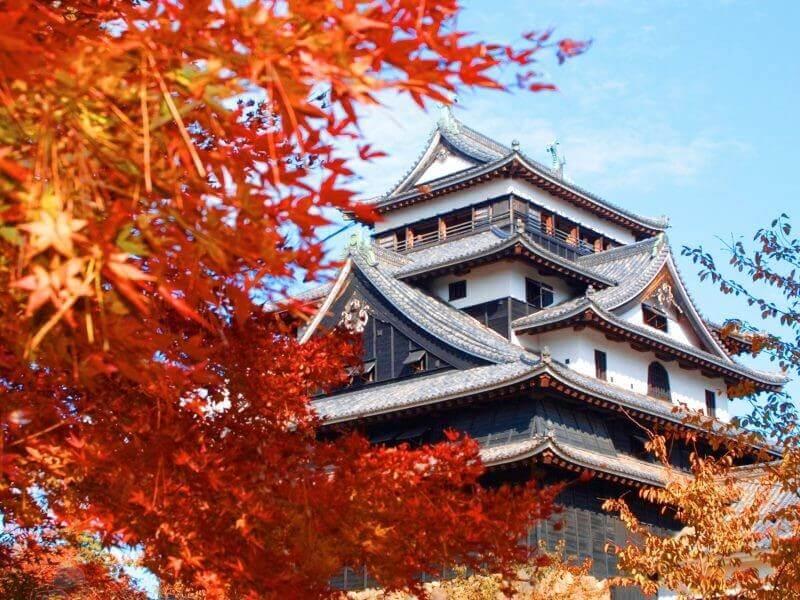 Vẻ đẹp thơ mộng của Tokyo khi tiết trời vàothu