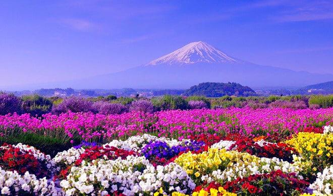 du lịch Nhật Bản mùa Hè là sự lựa chọn hoàn hảo