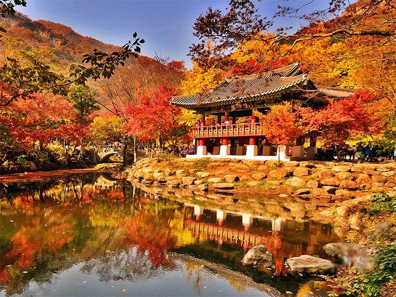 Du lịch Đài Loan mùa thu có điều gì đặc biệt